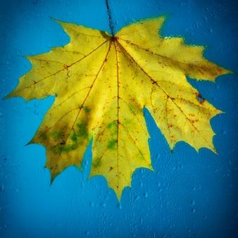Gevallen herfstbladeren op nat van regen glas close-up