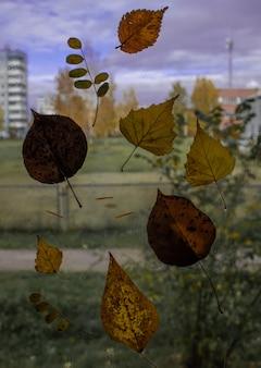 Gevallen herfstbladeren op nat van regenglas