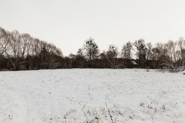 Gevallen witte sneeuw na een sneeuwval en bomen zonder bladeren in de winter