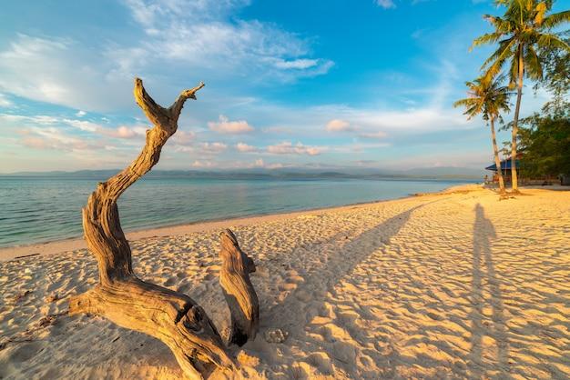 Gevlechte boom op strand bij zonsondergang