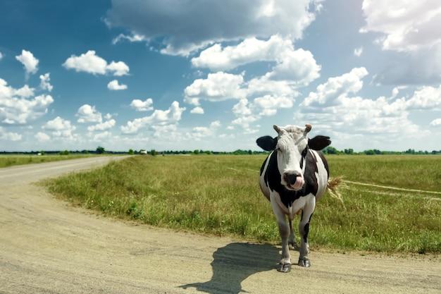 Gevlekte koe grazen op een prachtige groene weide tegen een blauwe hemel.