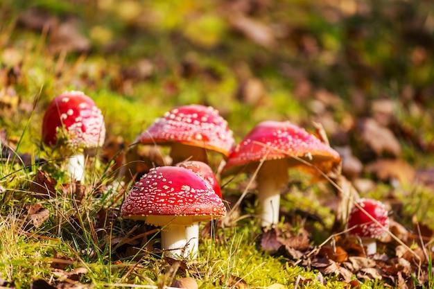 Gevlekte paddenstoelen in de herfst