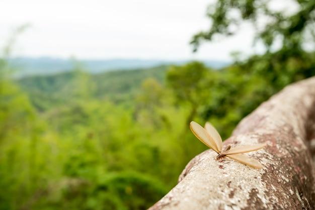 Gevleugelde termieten