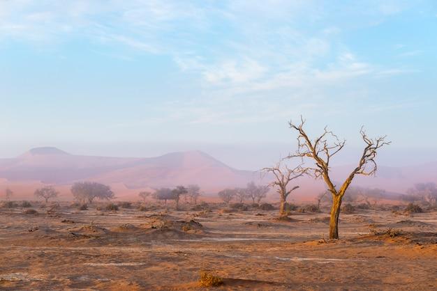 Gevlochten acaciaboom en rode zandduinen.