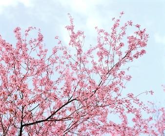 Gevoelige roze de lentebloesems op bloeiende boom