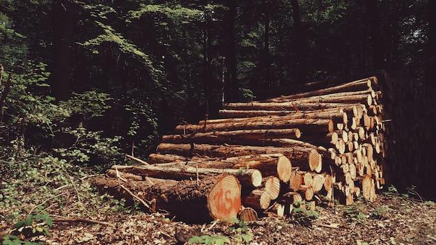 Gevouwen boomstam in een duits bos