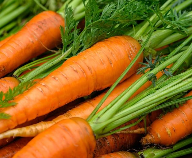Gewas van verse biologische gewassen wortelen met groene toppen