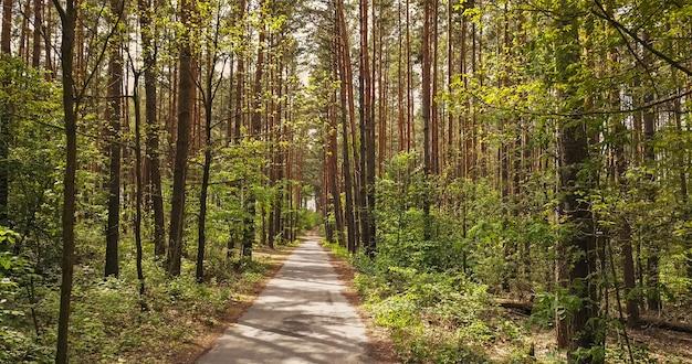 Geweldig landelijk landschap met bosweg om te wandelen en fietsen. loopbrug pad met groene bomen in het park in zonnige zomerdag.