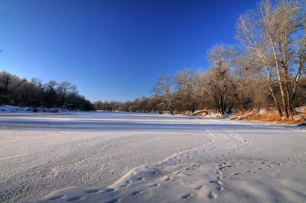 Geweldig panorama van loofbomen die groeien aan de oevers van de rivier op een zonnige lentedag