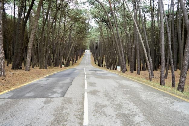 Geweldig shot van een lege weg die door een dicht bos gaat