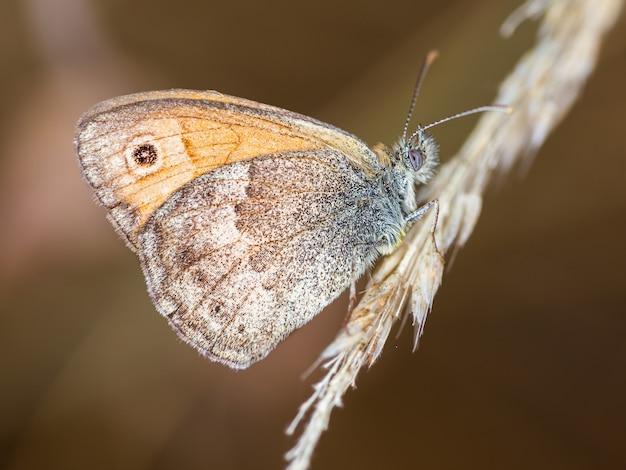 Geweldige macro-opname van een vlinder in een natuurlijke omgeving