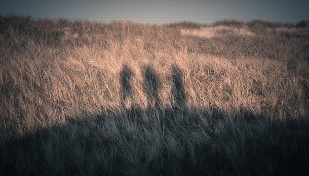 Geweldige opname van het silhouet van drie mensen op de kustlijn