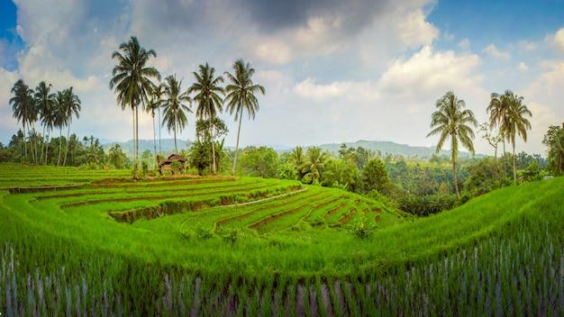 Geweldige panorama rijstvelden azië
