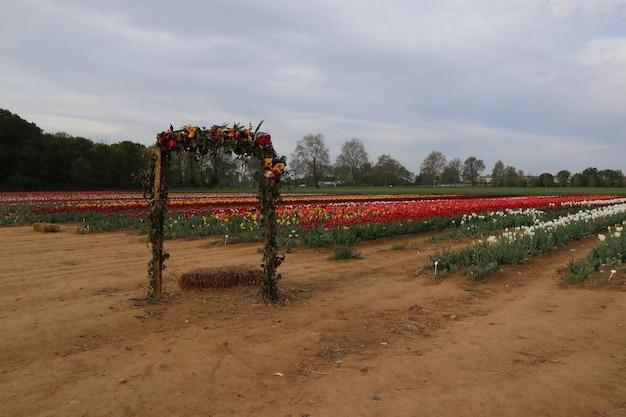 Geweldige tulpenvelden in italië