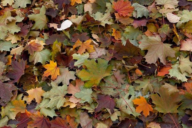 Geweldige veelkleurige achtergrond van natuurlijke herfst gebladerte