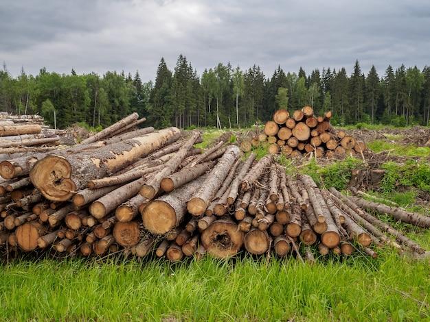 Gezaagde bomen liggen in een grote stapel op de achtergrond van het bos