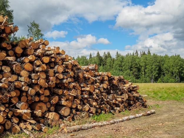 Gezaagde boomstammen liggen in de zomer op een grote stapel in de buurt van het bos