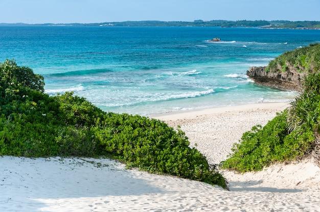 Gezellig turkooisblauw zeestrand met golven, kustplant, witte zandduinen.