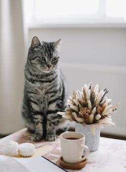 Gezellige foto van een grappige kat thuis