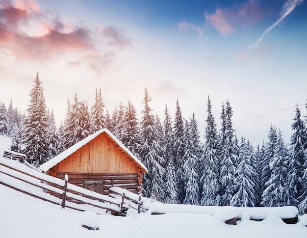 Gezellige houten hut hoog in de besneeuwde bergen. grote pijnbomen op de achtergrond. verlaten kolyba-herder. karpatische bergen. oekraïne, europa