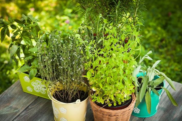 Gezellige huistuin met kruiden - rozemarijn, salie, basilicum, tijm en oregano