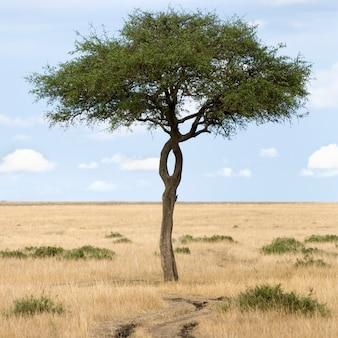 Gezicht op een boom naast een pad in een vlakte in het natuurreservaat van masai mara.