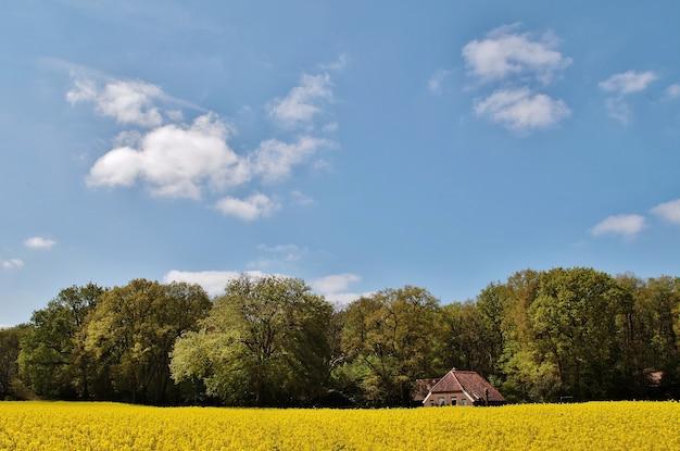 Gezicht op een mooi huis in een met bloemen en bomen begroeid veld in nederland