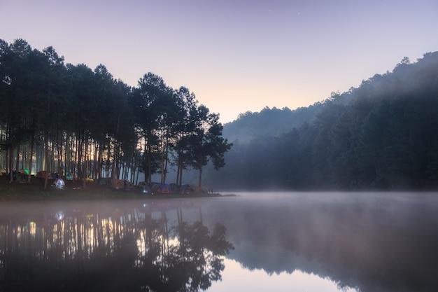 Gezichtspunt dennenbos op mistig reservoir