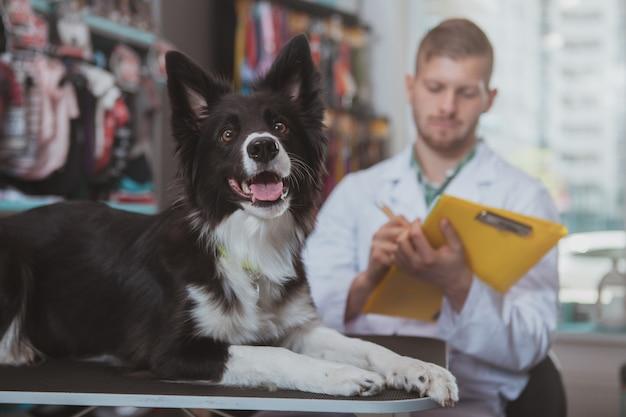Gezonde gelukkige mooie hond die op onderzoekslijst op dierenartskantoor liggen