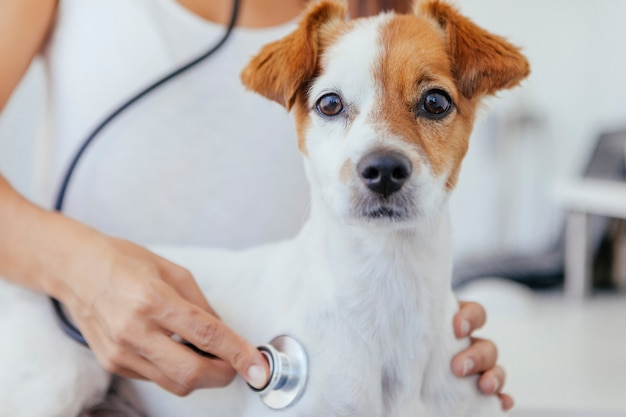 Gezonde pup klaar voor jaarlijkse keuring bij de dierenarts