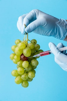 Ggo-chemisch gemodificeerde voedseldruiven