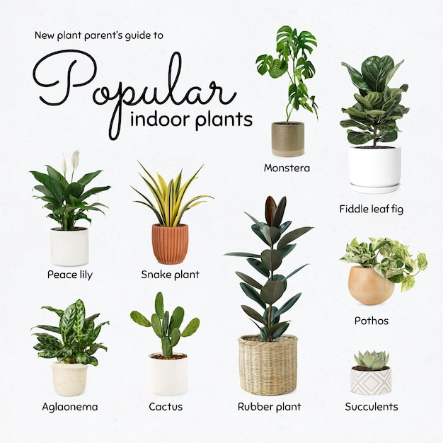 Gids voor nieuwe plantenouders voor populaire kamerplanten