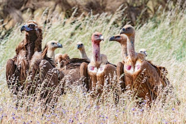 Gieren in de natuur tussen hoog gras