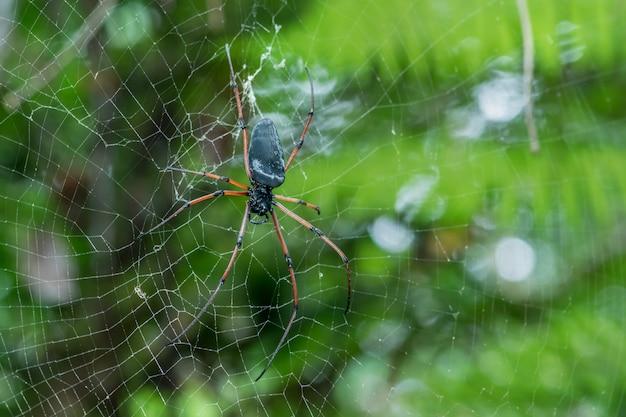Gigantische spin op web