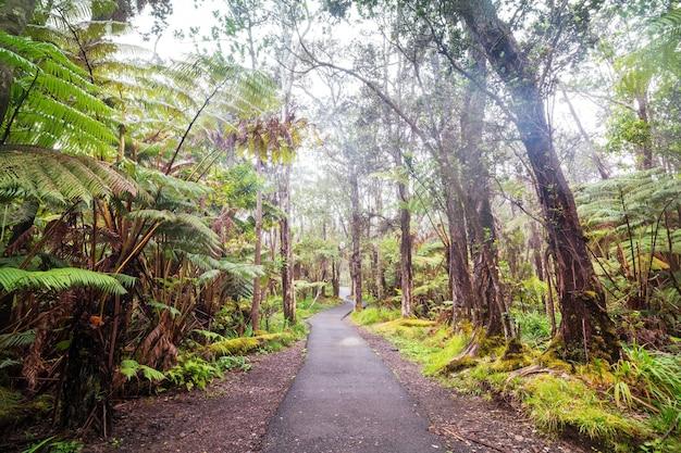 Gigantische varenbomen in het regenwoud, het eiland van hawaï