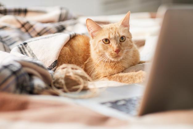 Ginger cat met behulp van laptop