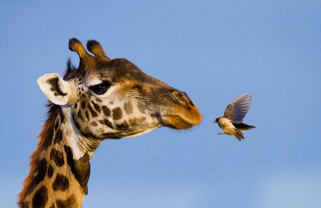 Giraf met vogel.