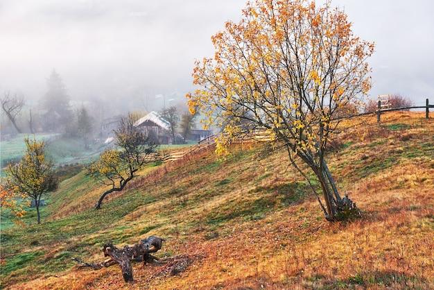 Glanzende boom op een heuvelhelling met zonnige balken op bergdal bedekt met mist.