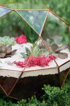 Glas florarium met succulenten binnen in de tuin