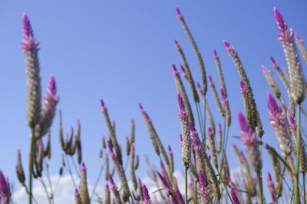 Glasbloem in aard tegen blauwe hemel