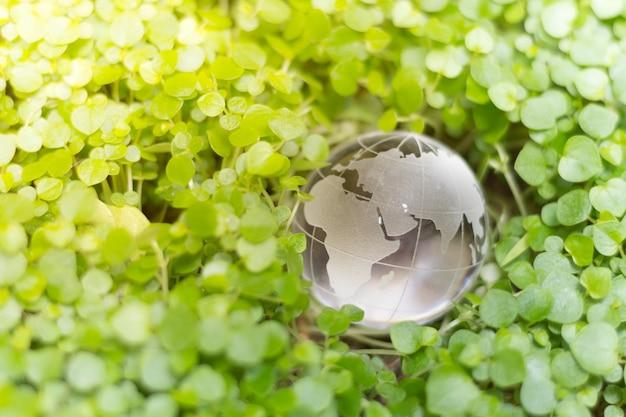Glasbol op groene bladeren voor eco-vriendelijk concept