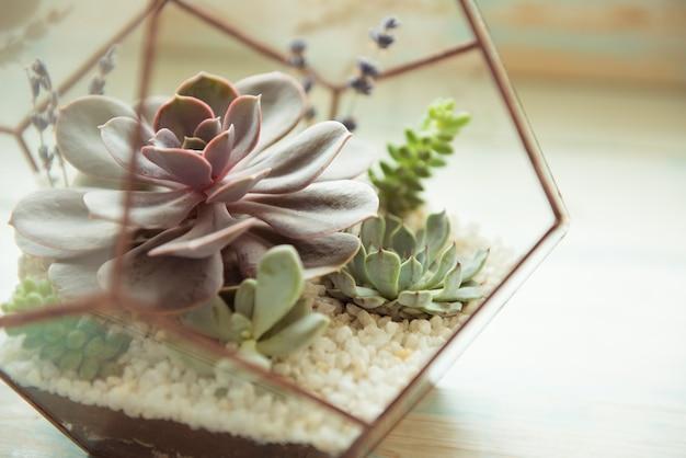 Glazen bloempot, vorm van een dodecaëder met echeveria en aloë