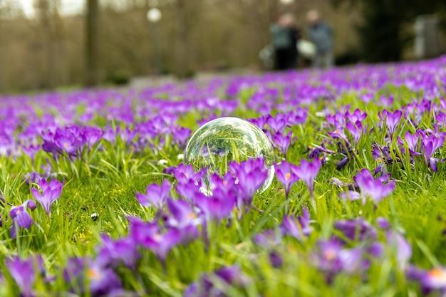 Glazen bol in het midden van paarse bloemen veld
