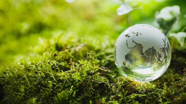 Glazen bol op groen mos in natuurconcept voor milieu en natuurbehoud
