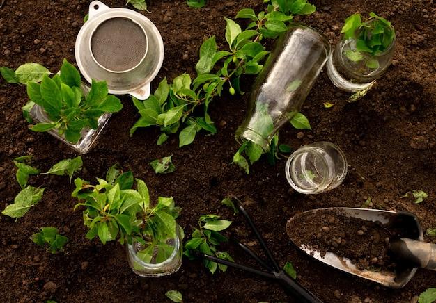 Glazen flessen en potten water, groene zaailingen of takken met kleine hark en schop op de achtergrond van de grond. tuinieren en plantenverzorgingsconcept