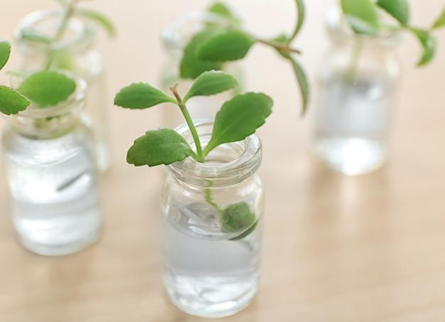 Glazen flessen met planten op tafel