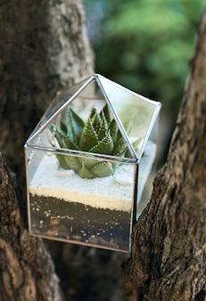 Glazen florarium met groene vetplant erin