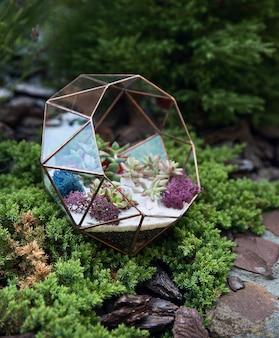 Glazen florarium met vetplanten binnen onder groen mos