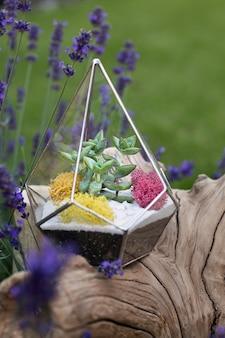 Glazen florarium met vetplanten binnen op de houten stronk en lavendelbloemen als decoratie