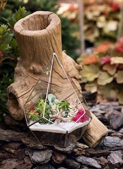 Glazen florarium met vetplanten erin en een bruine stronk erachter